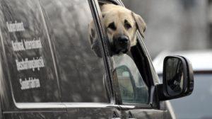 Putujete sa psom? Evo što biste trebali, a što nipošto ne smijete činiti